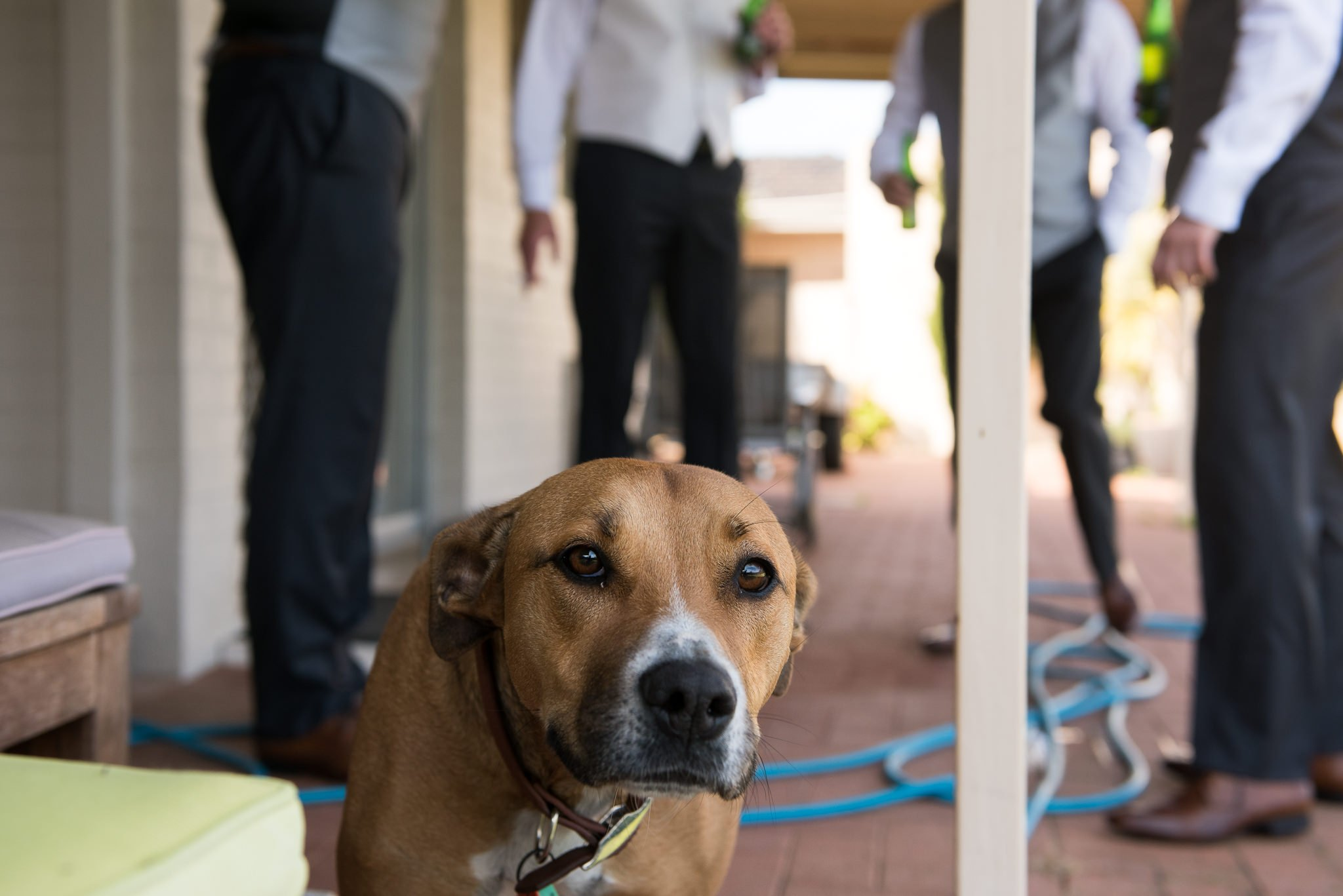 dog with groomsmen behind